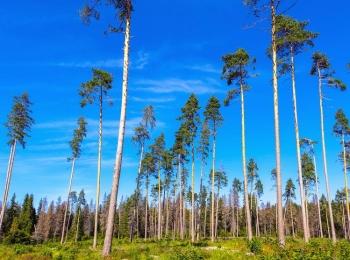 Коттеджный поселок Звенигородский лес